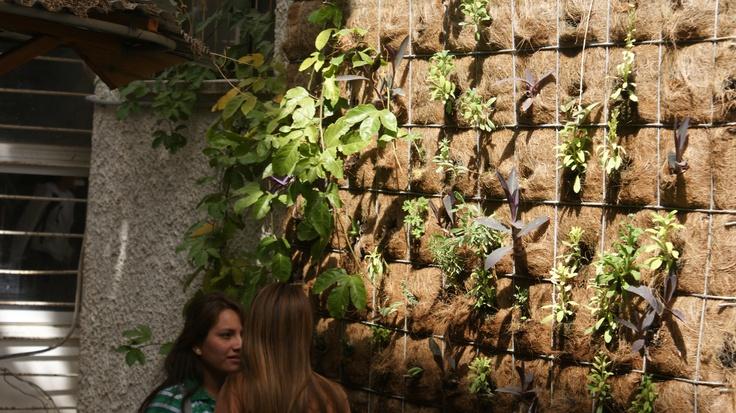 La visita a escuelas ecológicas donde existen sembríos de plantas en paredes y techos de las aulas escolares fue una de las actividades realizadas en Israel.