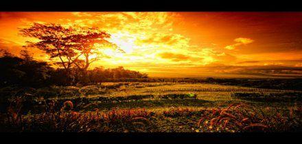 I am now the official blogger of Stonehouse Gardens Resort, Camarines Sur Philippines  https://www.facebook.com/StonehouseGardensResort  #naga #camsur #bicol #travel #thingstodo #itsmorefuminthephilippines #mtisarog #rainforest #flora #fauna #weddingevents