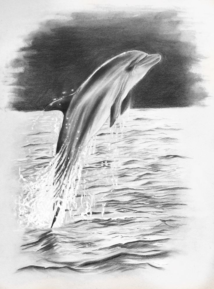 dolphin, pencildrawing -by Josephine Doege