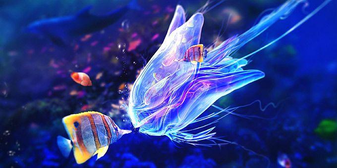 Ψάρια κλόουν, μέδουσες και άλλα μαγικά πλάσματα στην αγκαλιά του ωκεανού -   Φωτογραφική μαγεία από τους βυθούς των ωκεανών