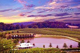 Виноградник, Долина Напа