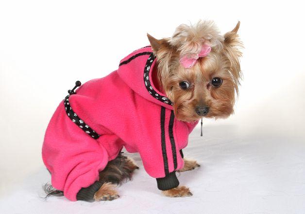 47 best Nähprojekte Chi Chi images on Pinterest | Hunde ...