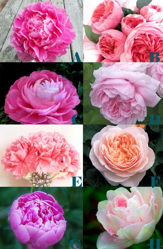 Everybody loves a peony bouquet but few realize they aren't actually looking at peonies. Here are some peony alternatives that you can substitute.