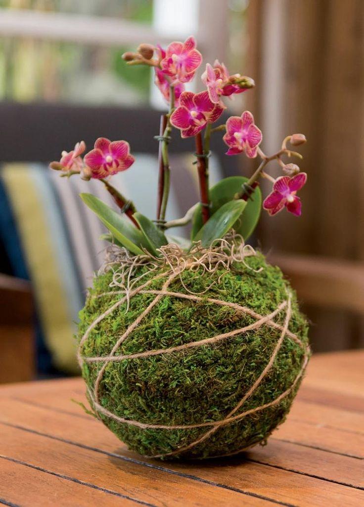 Gartenpflanzen unglaubliche Ideen für das Design von Kokedamas