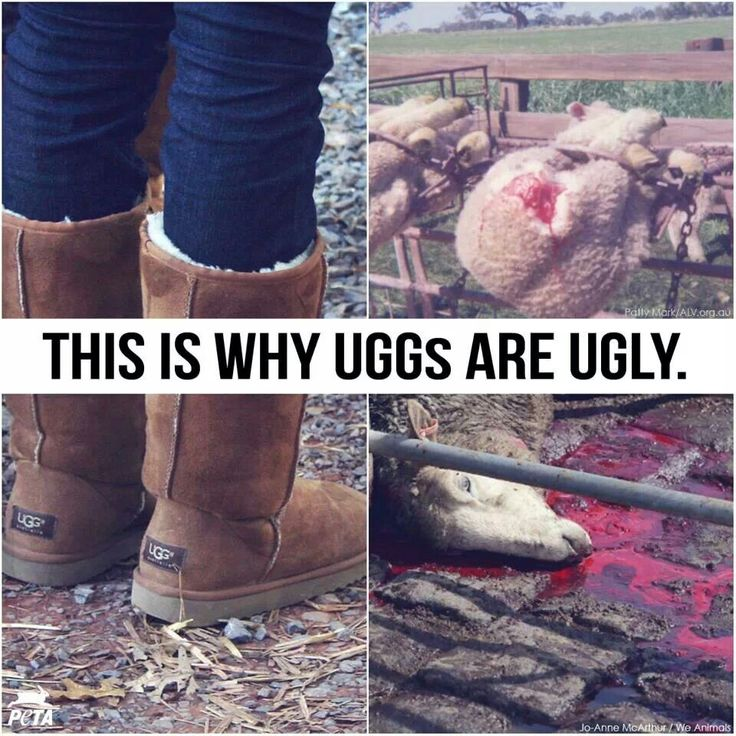 Would you still wear these knowing the sheep are skinned alive? Help fight animal abuse. Stop wearing and purchasing UGG boots.