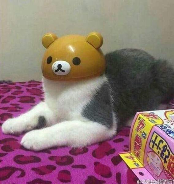 え?猫ならさっき裏口から出ていったのを見ましたよ。 - ボケて