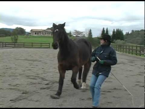 how to become a certified horse trainer