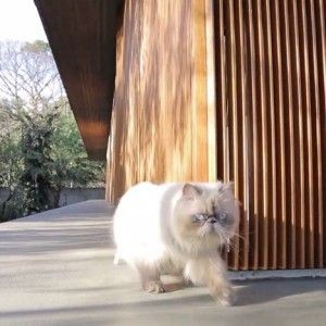 Movie: Toblerone House by Studio MK27  through the eyes of a cat
