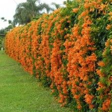 blühende winterpflanzen 225 besten tanaman hias bunga bilder auf pinterest