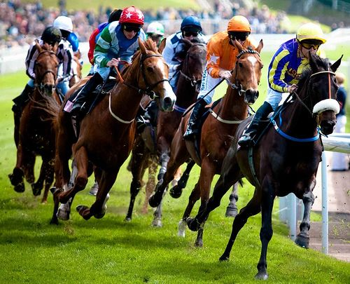 Get horse racing tips from our website and win big  We provide reliable information and sound tricks that will make you a winner more often.