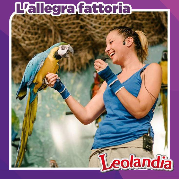 Simpatici animali e colorati pappagalli sapranno regale sorrisi a grandi e piccini. Partecipa anche tu alla grande festa in fattoria! Non mancare.