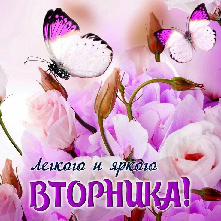 Гифки доброго вторника, цветы василек красивые