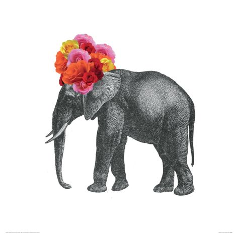 Elephant Giclee Print by John Murphy at Art.com