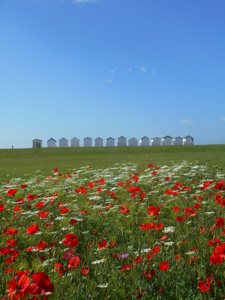 Goring seafront poppies
