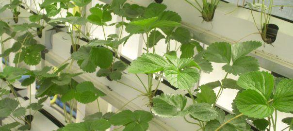 What is Hydroponic Gardening   Rustic Gardener