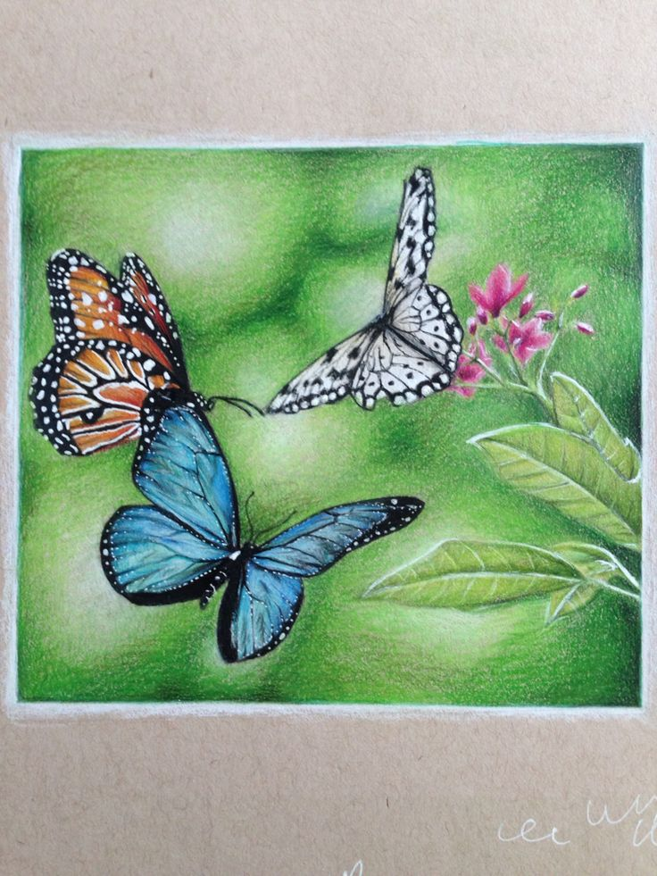 My latest drawing of some beautiful butterflies