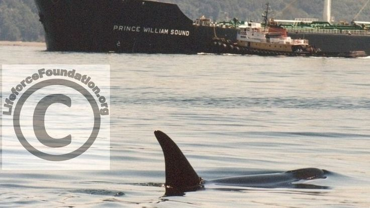 """Save the Orca Families from Extinction! 