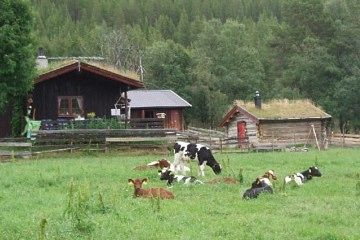 Seteridyll i Gammeldalen