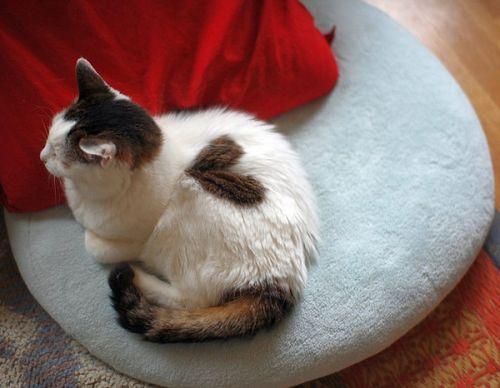 Cat-heart. Repinned from Vital Outburst clothing vitaloutburst.com