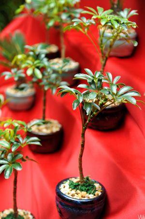 Bonsai tree...what a unique party favor!