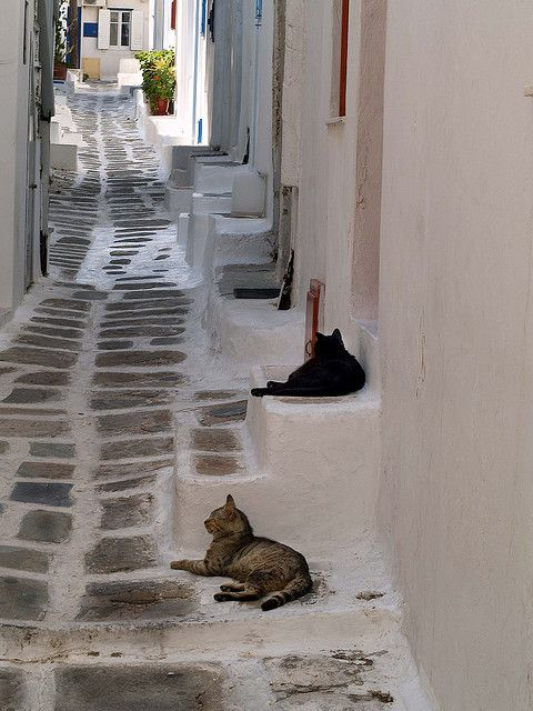 It's a Cats Life, Streets of Mykonos | Greece
