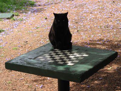 El blanco abandona. Fotografía de Uwe Schoor tomada en el bonaerense parque de Chacabuco donde, según nos informa el autor, las viejas mesas de ajedrez van ...