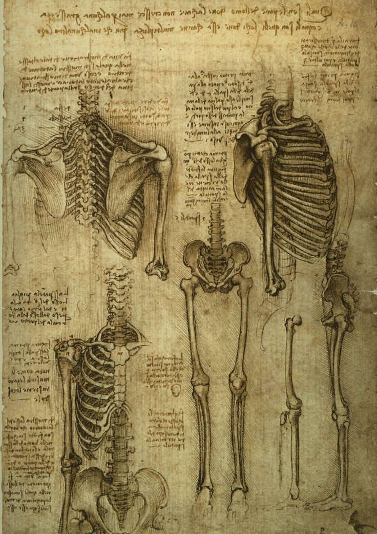 20 besten Exposición Leonardo Bilder auf Pinterest   Anatomie ...