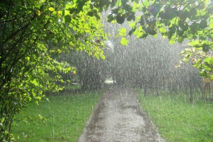 Как помочь растениям в период обильных дождей