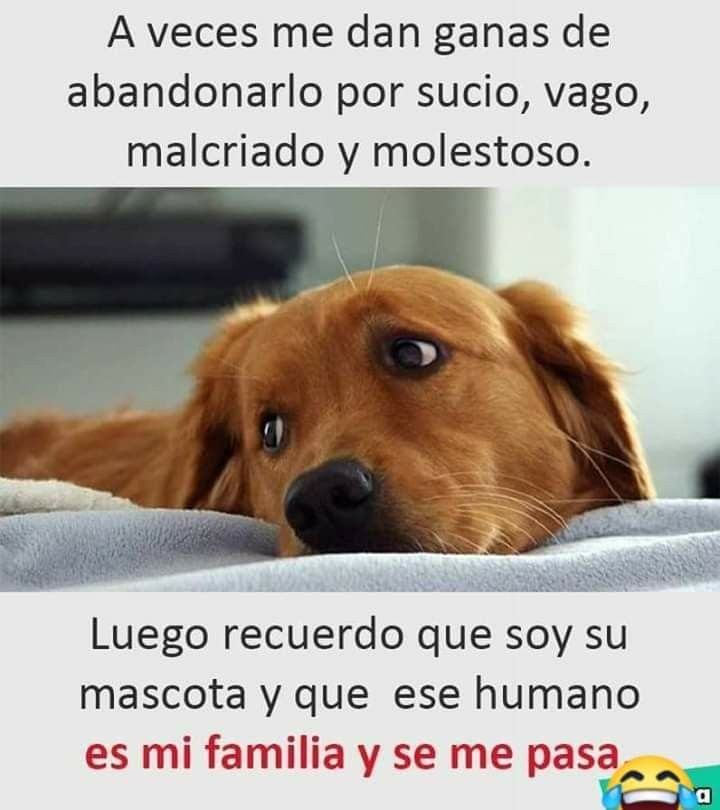 Pin By Diana Antonio On Memes Animals Dogs Golden Retriever Dog Quotes