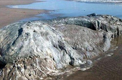 На мексиканский пляж выбросило загадочное морское чудовище (видео)