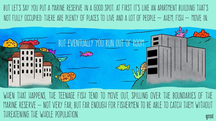 This illustrated guide makes marine protected areas fascinating | Grist