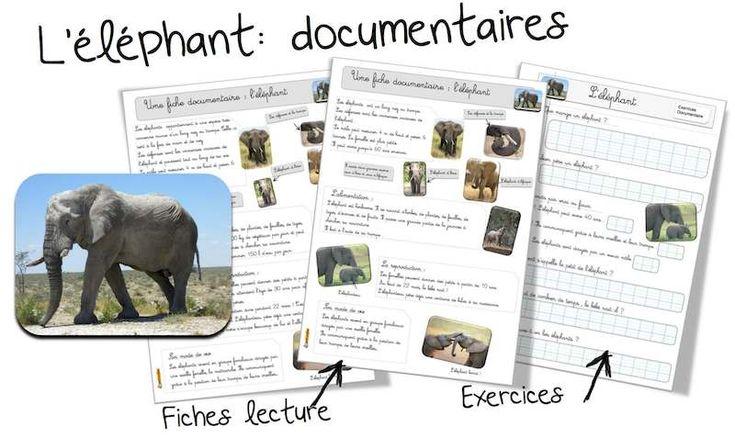 L'éléphant : fiche documentaire | Elmer | Documentaire