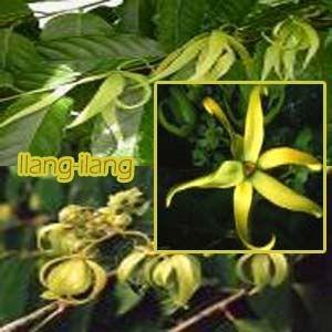 M s de 25 ideas incre bles sobre plantas ornamentales en for Vendo plantas ornamentales