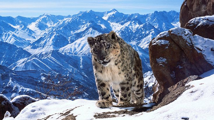 "release date? planet earth 2. LONDON — David Attenborough has come on board to narrate natural history series ""Planet Earth II,"" which is being presented to international buyers at a BBC Worldwide sales event in Liverpool…"