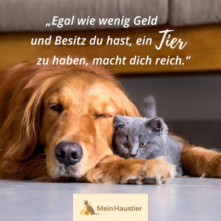 Liebe zu Tieren! #Mein # Tier # Liebe # Katzen # Sprüche # Zitat    – Katzensprüche