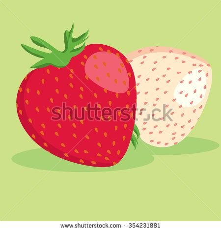 Red and white strawberries - stock vector