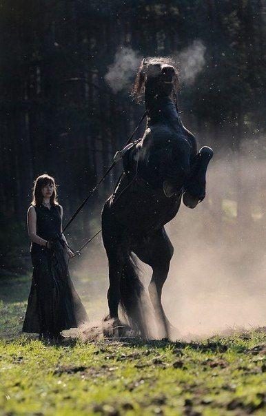 Фризская лошадь / Моё счастье