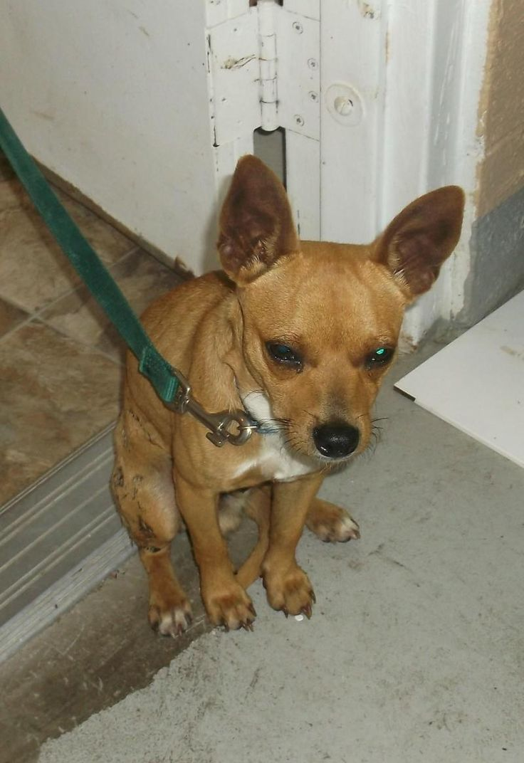Thor  was Dropped Off Form River Rd on 6/19/14 Adoption date is 6/23/14 Expected Euthanize date is 7/2/14  Lewisburg Animal Shelter 300 Woodside Avenue Lewisburg, TN 37091