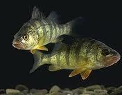 fish - Google-haku