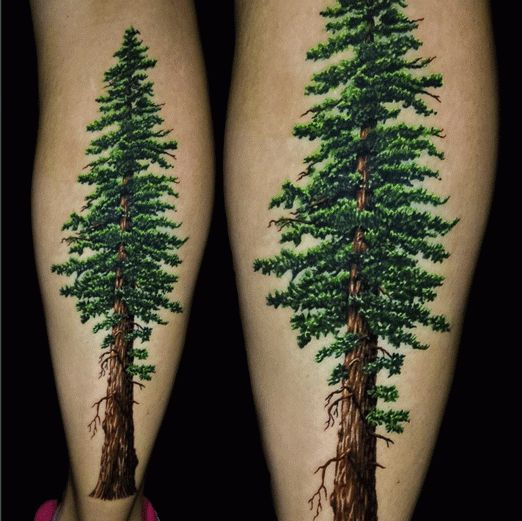 best 25 redwood tattoo ideas on pinterest tree tattoos pine tree tattoo and california poppy. Black Bedroom Furniture Sets. Home Design Ideas
