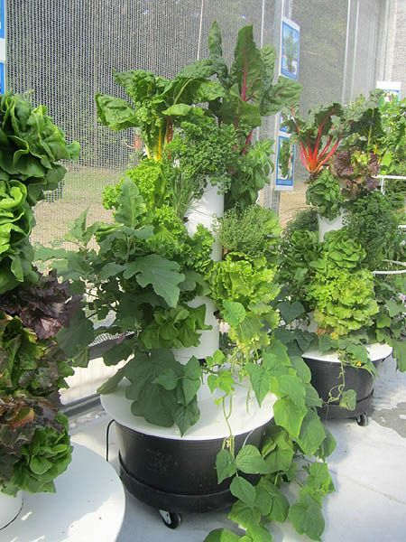 28 best Tower Garden images on Pinterest | Juice, Juices and Juicing