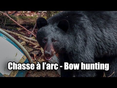 video Chasse à l'arc ours noir 2016 black bear bow hunting video - YouTube  https://www.youtube.com/user/MarcelChassePeche