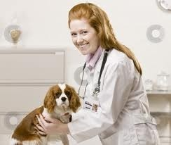 Best Veterinary Education  Career Images On