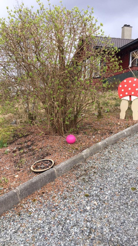 Rosa betongkule og kjerring i impregnert kryssfiner