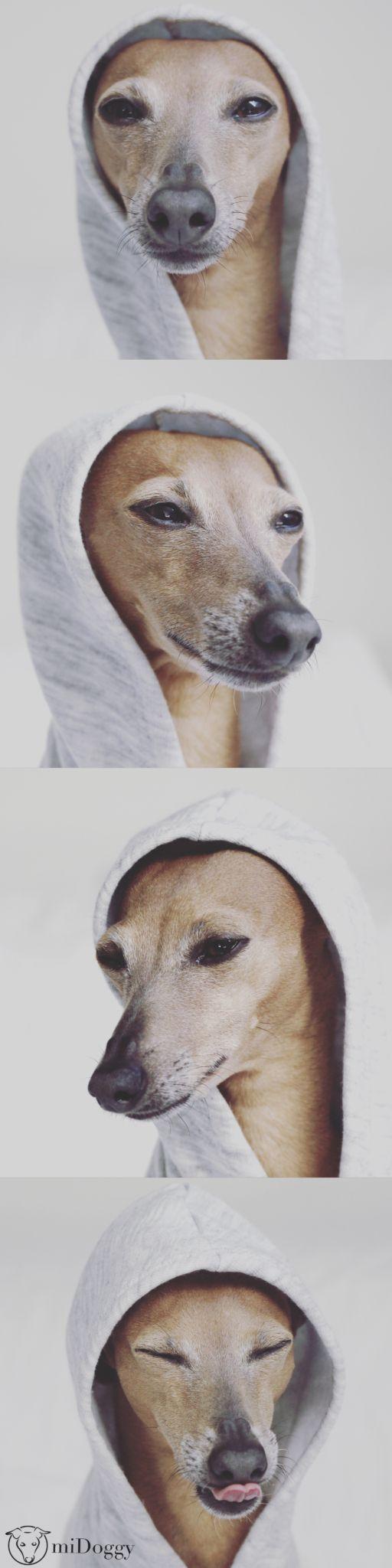 miDoggy - die Blog Community für alle Hundebegeisterte mit den besten Informationen und Ideen rund um den Hund aus erster Hand.