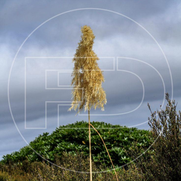 Llega un momento en la vida que todo llega a su fin.  #plants #nature #wildlife #ecoturismo #dry #adventure #travel #cloudy #photography #documentary #bestphoto #natgeo #natgeotravel #natgeowild #bbc #bbctravel #bbcearth #discovery