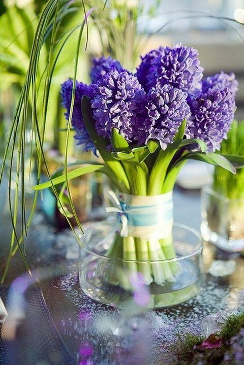 My mom loves the smell and look of hyacinths.  This is a beautiful way to display some and it's even her favorite color!  DIY:: Beautiful & Creative Hyacinth Centerpiece