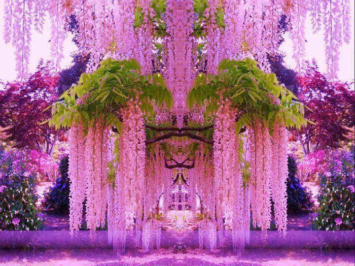 El Túnel de Wisteria, un Lugar Mágico donde Casarse