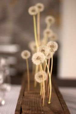 dandelions ***slid on top of nails*** centerpiece