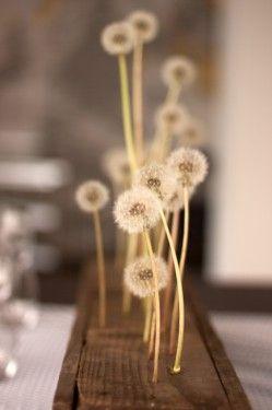 dandelions centerpiece
